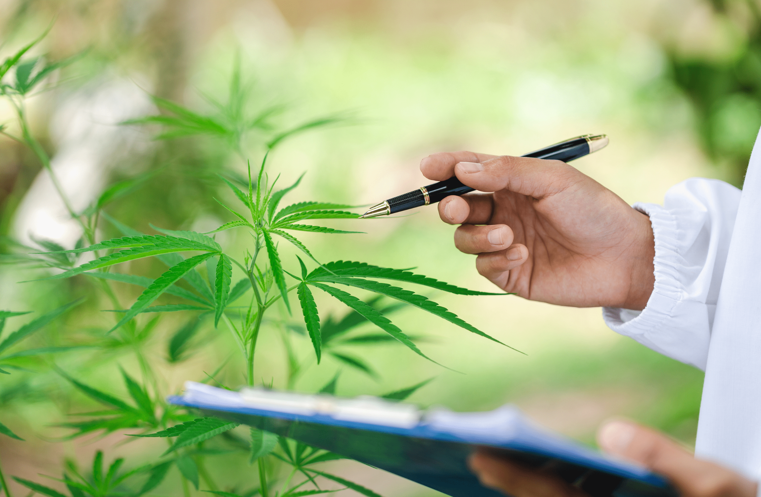 Read more about the article Breaking into the Cannabis Industry