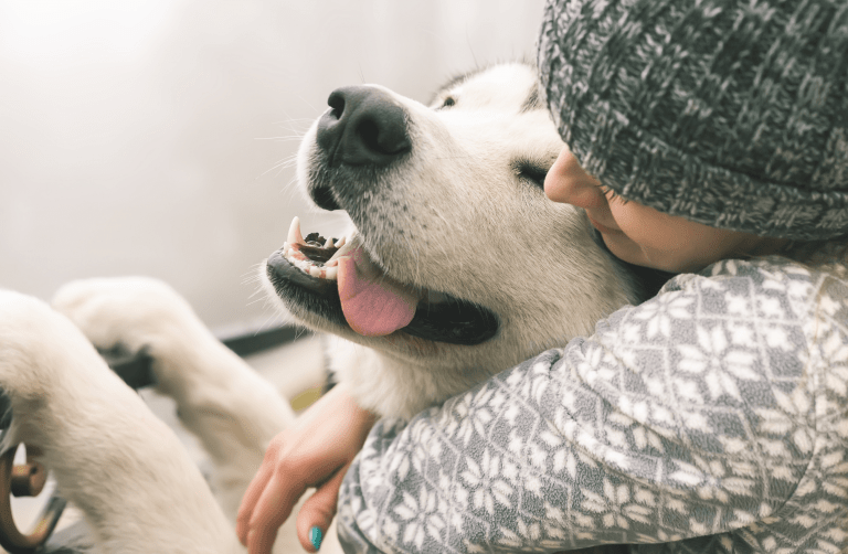 How the Multi-Billion Dollar Pet Industry Brands Mastered the Subscription Marketplace