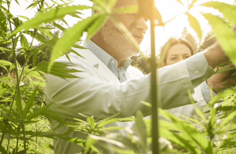 Read more about the article Today's Top Challenges for Cannabis Cultivators